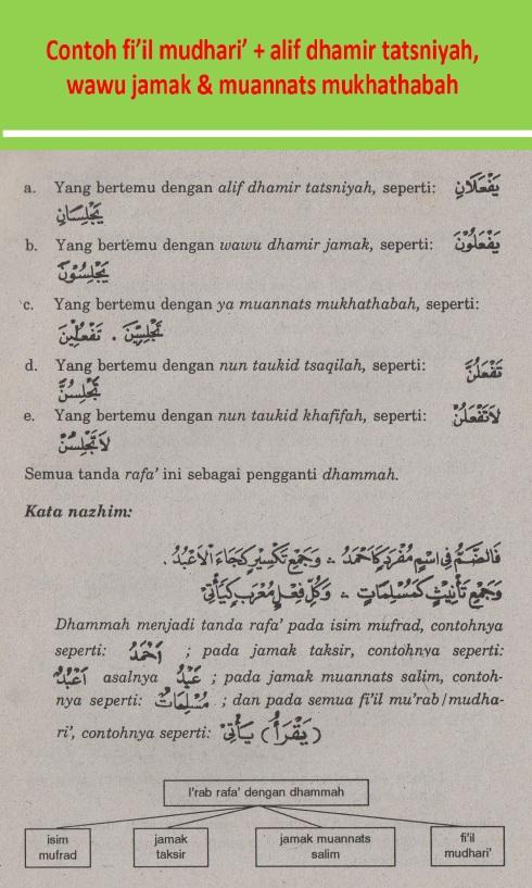belajar bahasa arab nahu shorof contoh fiil mudhari' + alif dhamir tatsniyah, wawu jamak & muannats mukhathabah
